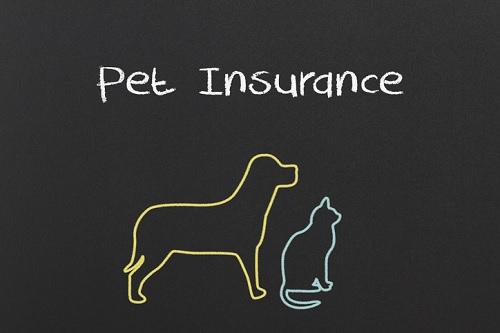 Animal-Friends-Pet-Insurance