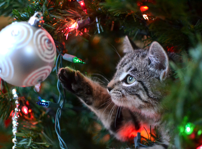 Tips for keeping your pet safe this Christmas | youTalk ...