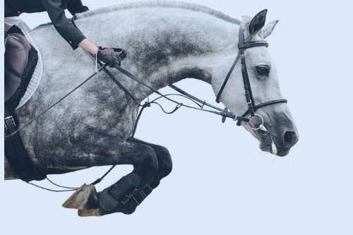 Specialist-Risk-Group-buys-equestrian-insurance-broker