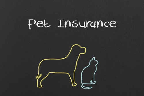 Pet-insurance-claims-payments-in-2018-reach-new-record-high