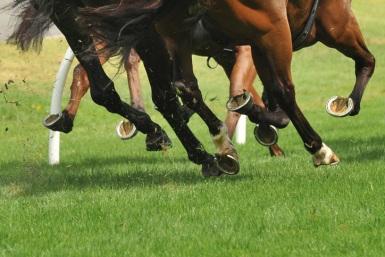 Racehorse-bloodstock-insurance
