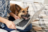 remote-pet-appointments