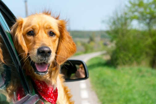 A-customer-guide-to-taking-pets-on-holiday