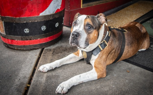 Pubs-are-providing-free-pet-wellbeing-sessions-to-help-owners-diagnose-their-dogs