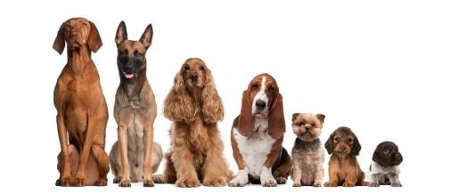Dog-ownership