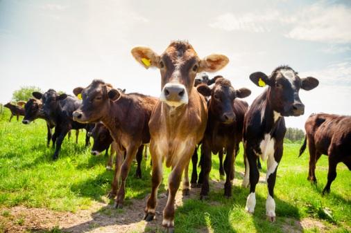 Farm-Safety-Week