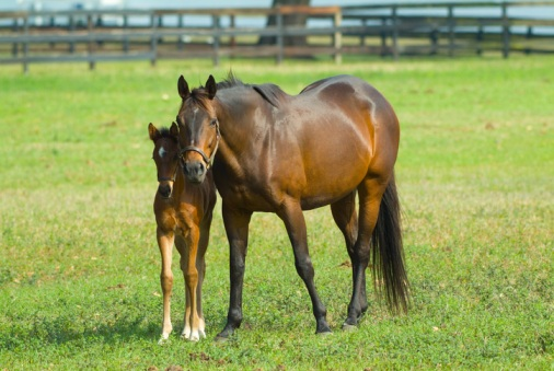 equine-insurance